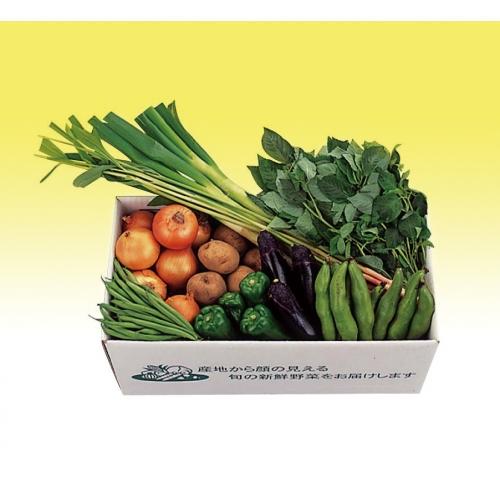 千葉県産 旬の採りたて新鮮野菜セット