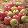 サンふじりんごと王林
