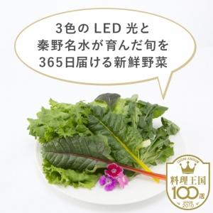 【Shune365】丹沢秦野 名水野菜 ミックス野菜セット