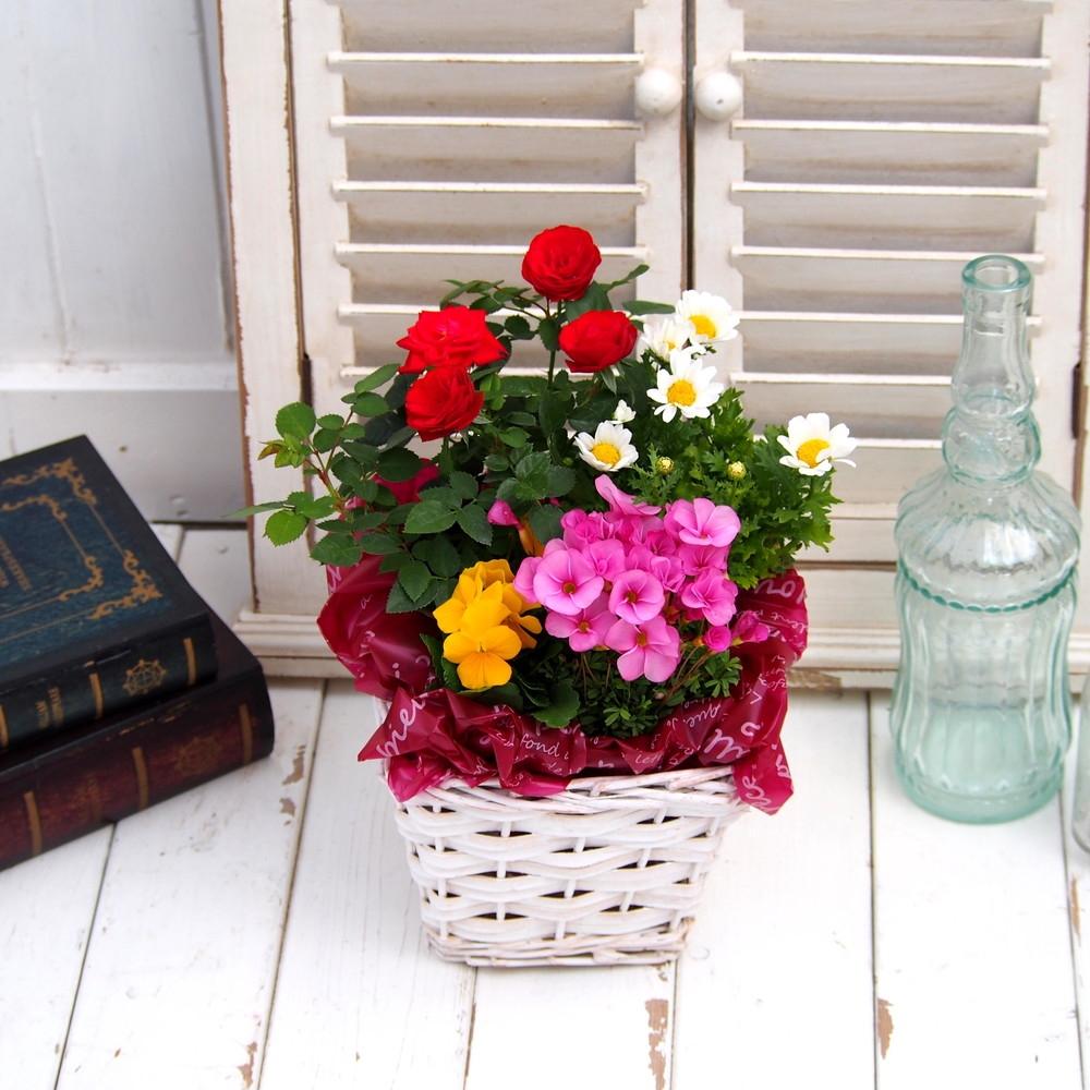 〈日比谷花壇〉季節の花バスケット