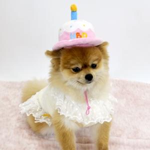ペット用玩具(誕生日帽子)