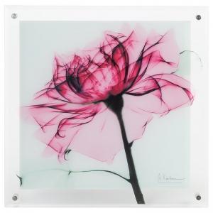 XRAYガラスアート ティールローズ XR-05001